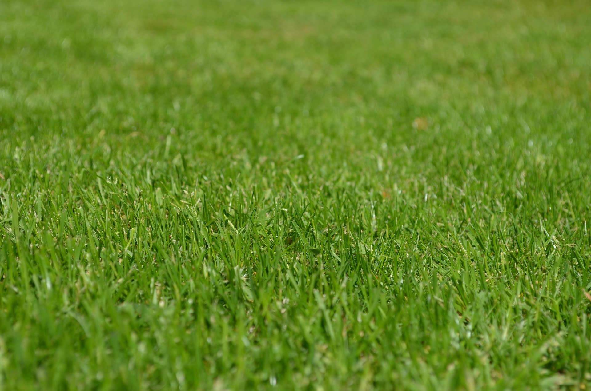 Etwas Neues genug So gelingt ein satter Rasen – DerNaturbaumarkt @KQ_24