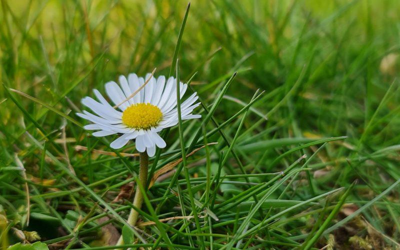 Rasenbild Frühjahr